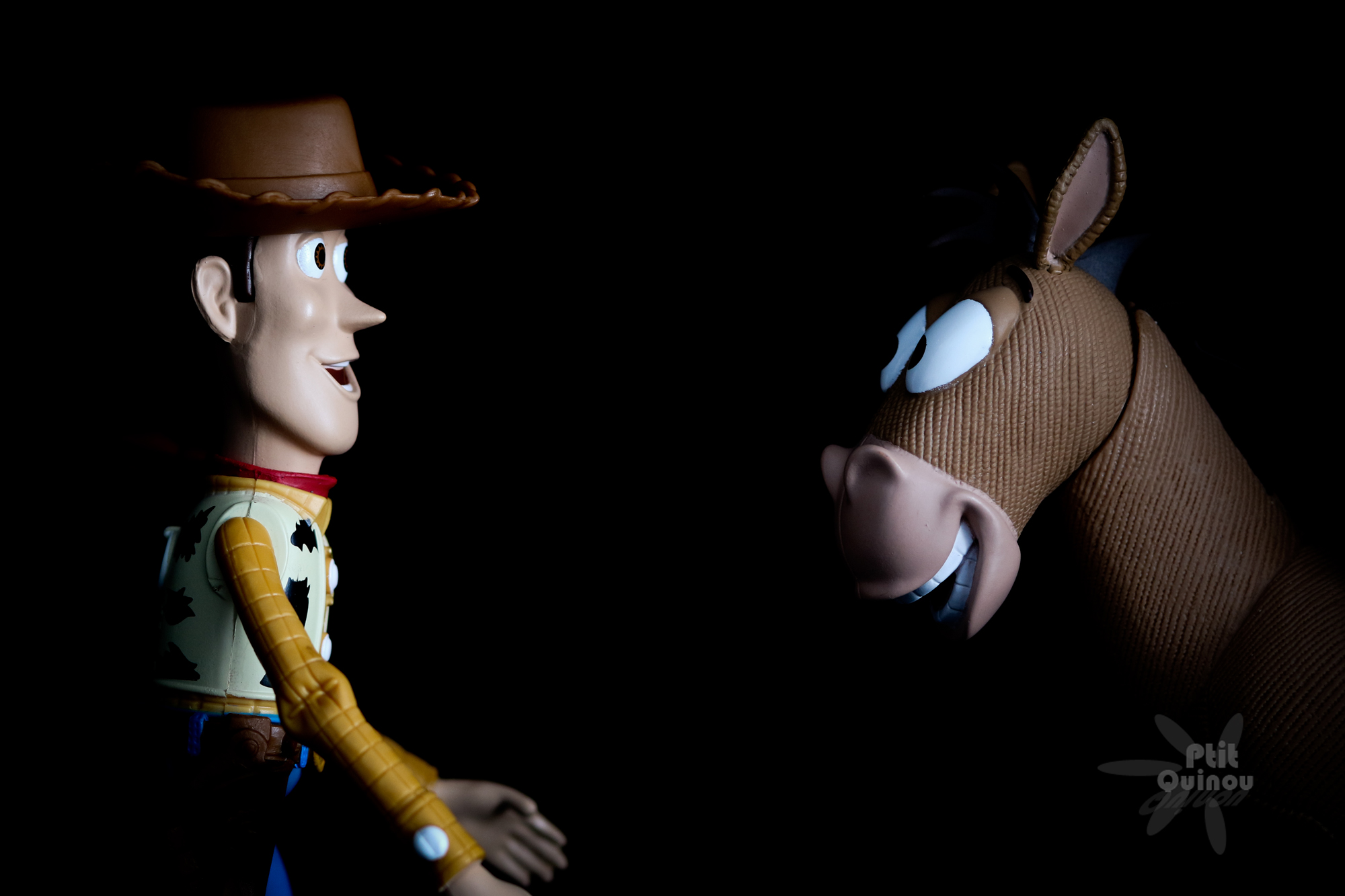 Woody VS Pile Poil